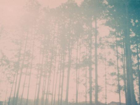 走到森林的出口