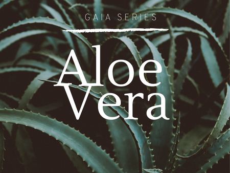 Gaia Series | Aloe Vera {Work In Progress}
