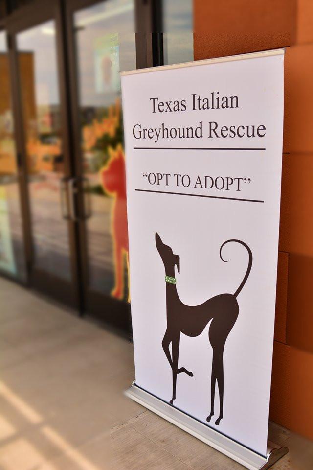 Opt to Adopt | Richardson, TX | TX Italian Greyhound Rescue
