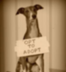 Potential Pet Owner Center | Richardson, TX | TX Italian Greyhound Rescue Inc.