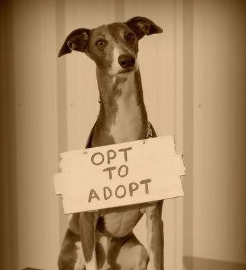 Potential Pet Owner Center | Richardson, TX | TX Italian Greyhound Rescue Inc.