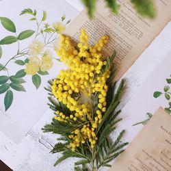 還記得2011年去威尼斯過面具節的時候,3月8號當天我在路上收到了一束黃色的小花