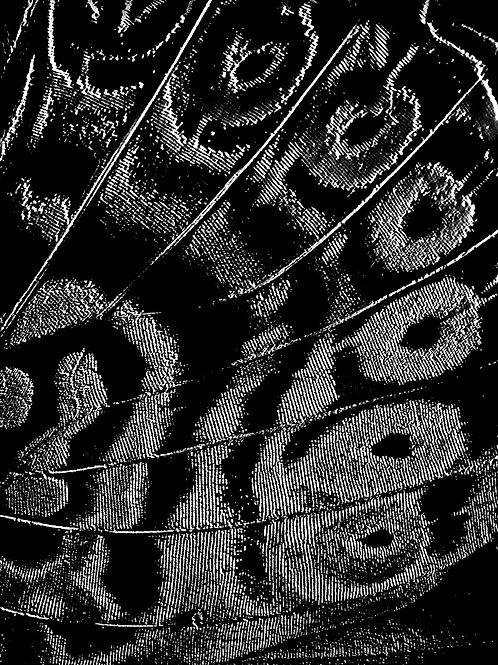 Abstração 3/57