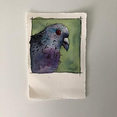 Pigeon Mini Painting
