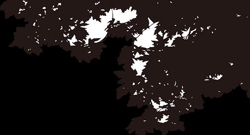 木々影.png