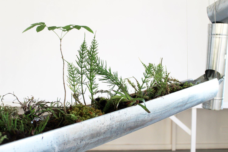 Erosiontree
