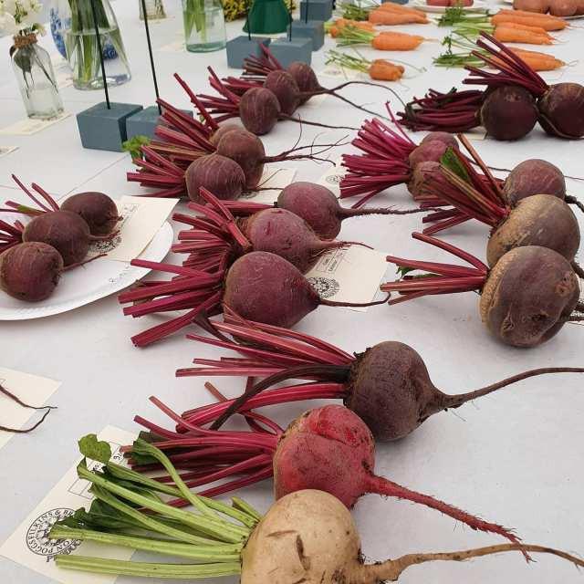 010 Lovely Vegetables