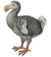 A dodo in The Land of The Twelve Churches in Shill Valley and Broadshire