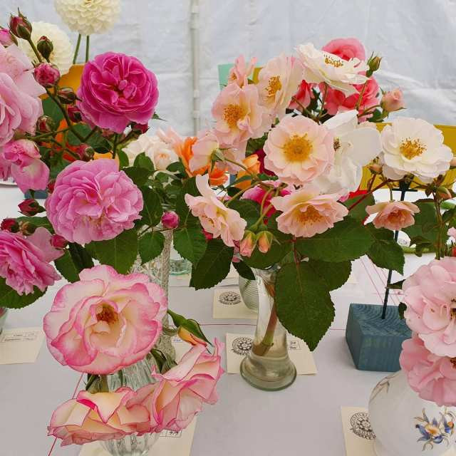 006 Roses