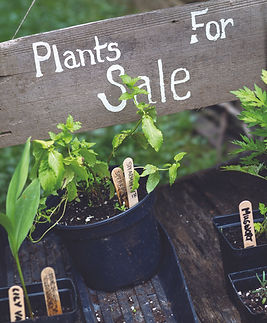 Plant sale in Alvescot in The Land of the Twelve Churches