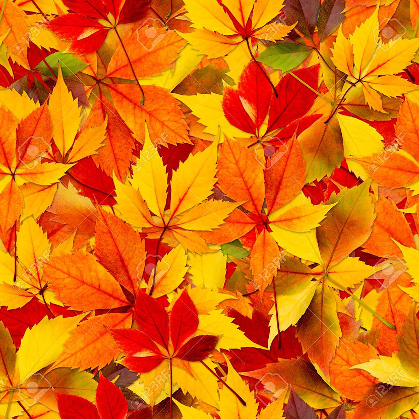 Leaves poetry Benefice Shill Valley Broadshire Land of 12 churches