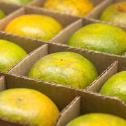 Fresh green oranges in cardboard box wit