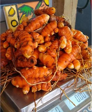 Turmeric Plant