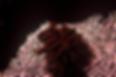 image (39).tif