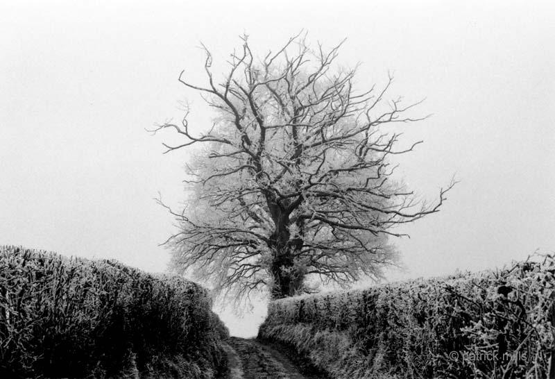 skeletal tree, wales