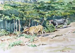 Cows on Monte Cervati