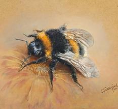 Bee Sanctuaries in Scottish Gardens