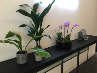interior-plant-design-london