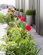 urban gardening london