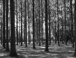 poplars argoules