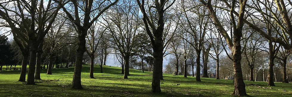 Trees-Roundwood-Park-1200x399_edited.jpg