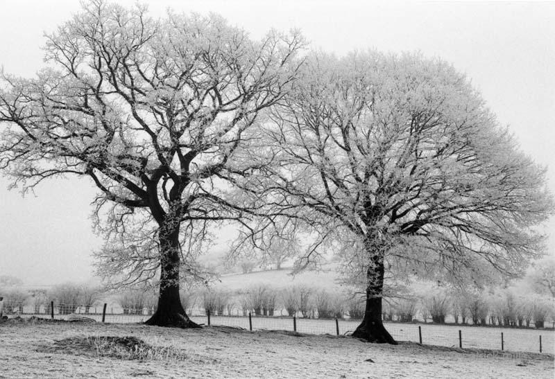 frosty oaks, wales