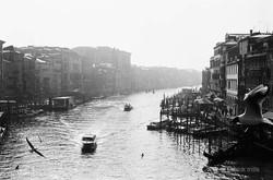 seagull, grand canal, venice