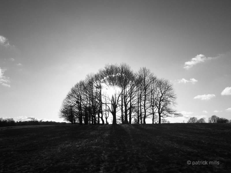 trees sevenoaks