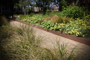battersea-communal-gardens