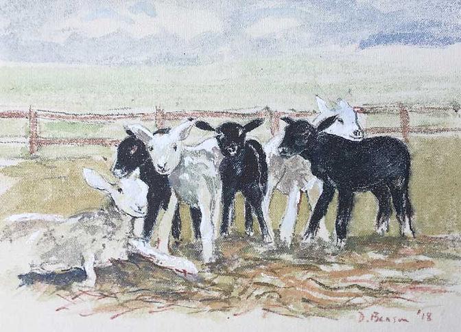 Lambs - Black and White
