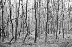 crecy woods