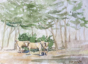 Cattle in Italy