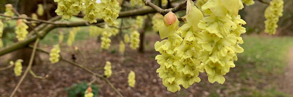 Arboretum-yellow-tree-1200.jpg