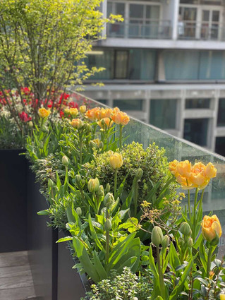 kajima-tulip-landscapes