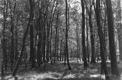 crecy forest