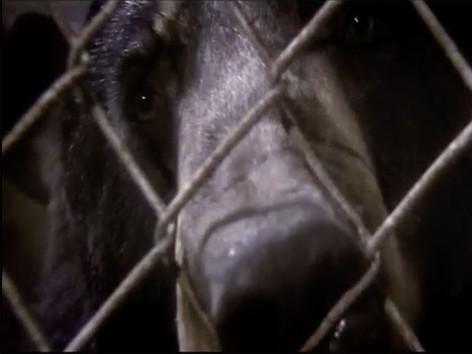 Terror At Bear Farm | Fatal Attraction - ANIMAL PLANET