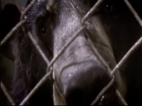 Terror At Bear Farm | Fatal Attraction - ANIMAL PLANET