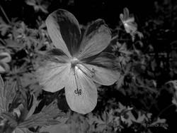 flower stigma reflection