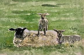 Suffolk Ewe and Twins