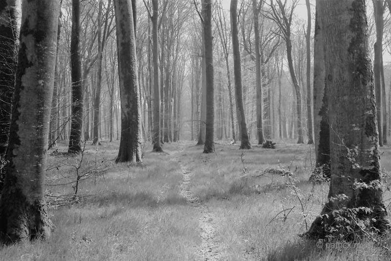 crecy path