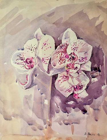 Phalaenopsis. The Moth Orchid