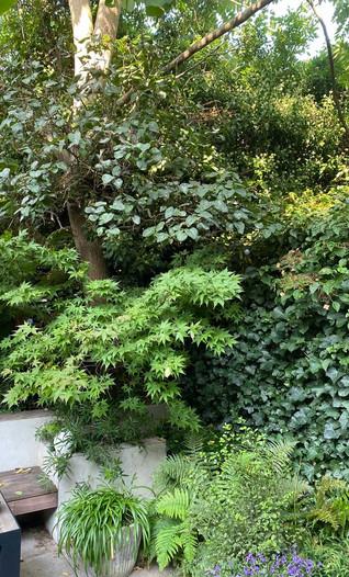 contemporary-garden-design