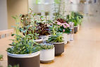 hotel planting