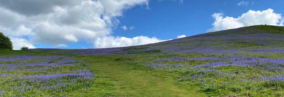 Lavender-sky-1600x550.jpg