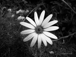 slender petals
