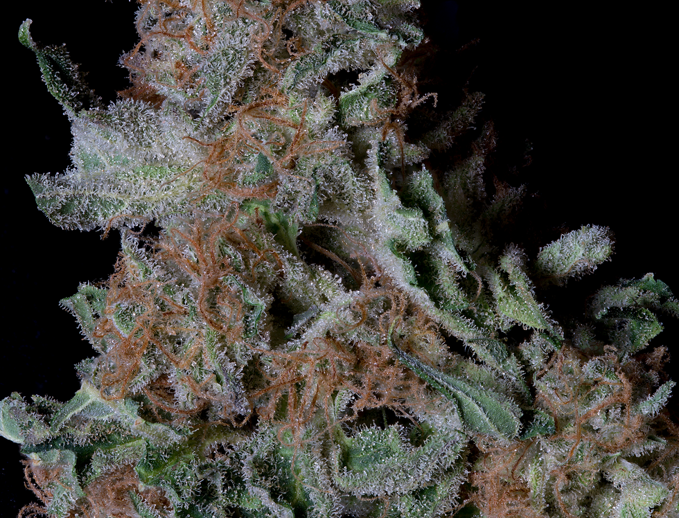 Don Blueberry Cookies