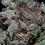 Thumbnail: Don Cherrypie