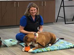 Dr-Caitlin-Leonard-canine-acupuncture (1