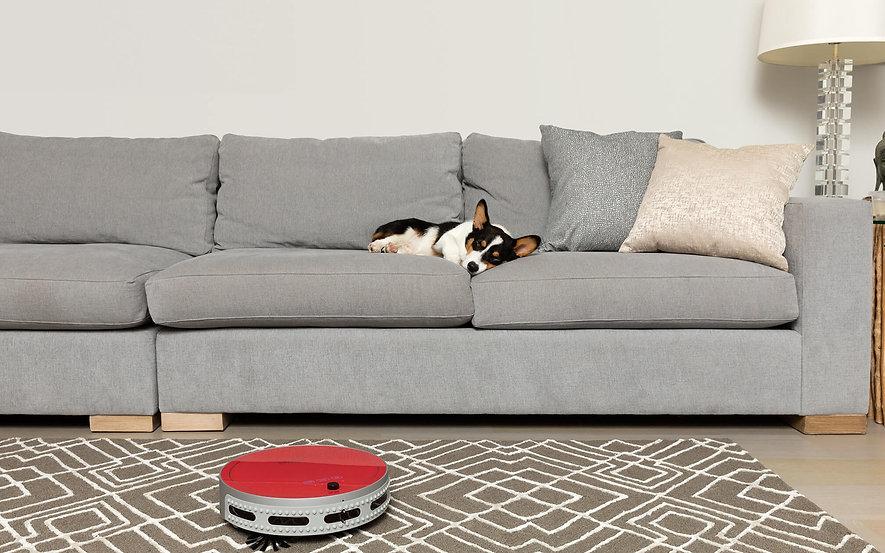 Corgi dog sleeping on couch while bObi Pet cleans carpet