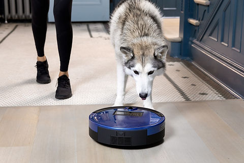 Large dog husky playing with cobalt Bob PetHair Plus